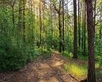 3.8 milyon metrekarelik orman alanı Hazine'ye devredildi!