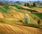 Artık tarım arazilerine yatırım yapan çok kazanacak!