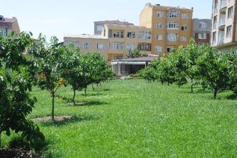 Bağcılar Belediyesi fındık bahçesi kuruyor!
