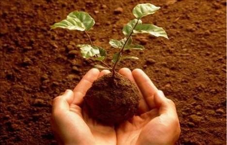 Orman ve Su İşleri Bakanlığı 2 bin 77 hatıra ormanı oluşturdu!