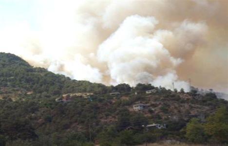 Alanya'da 10 dönüm kızılçam ormanı yandı!