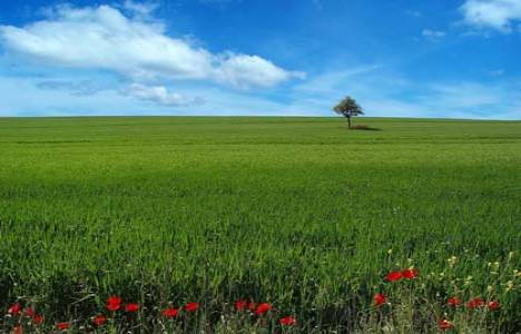 Arsa ve arazi