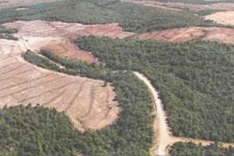 Orman parselasyon çalışmaları