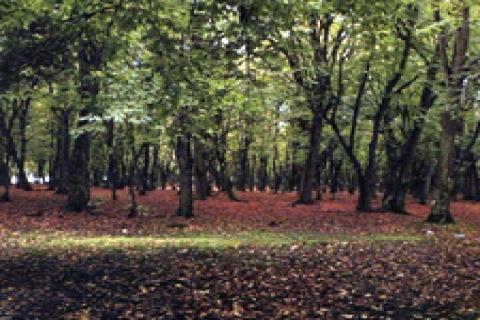 Orman Mühendisleri Odası'ndan 2B raporu