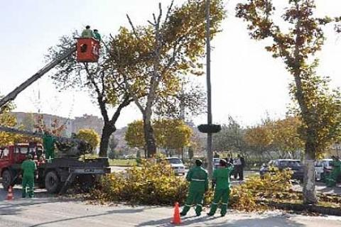 İnönü Üniversitesi'nde ağaç parkı kurulacak!