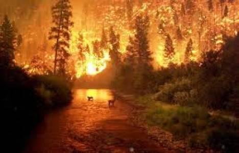 Düzce'de orman yangını çıktı!