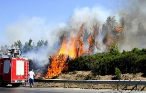İzmir'deki orman yangınları!
