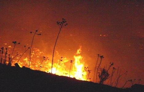 Bozyazı'da ormanlık alanda 20 dönüm orman yandı!