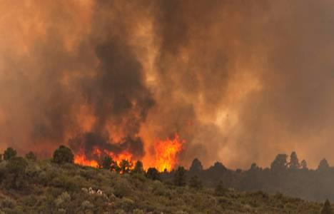 Arizona'da ormanda yangın