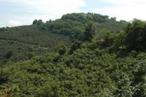 Giresun'da satılık fındık bahçesi