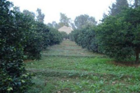 2-B arazileri 600 bin hektara çıkabilir