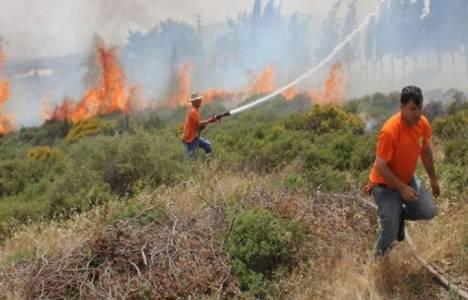 Manisa Sabuncubeli yangınında 300 hektarlık alan kül oldu!