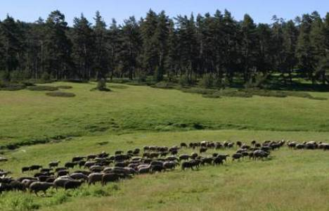 Milli Emlak'tan Kastamonu'da 10 bin 750 TL'ye satılık ham toprak!