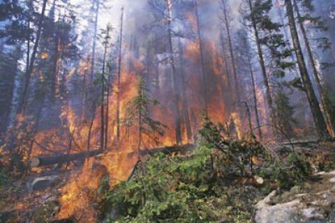 Suriye'nin Lazkiye ve İdlip kentlerinin ormanlık alanlarında yangın çıktı!