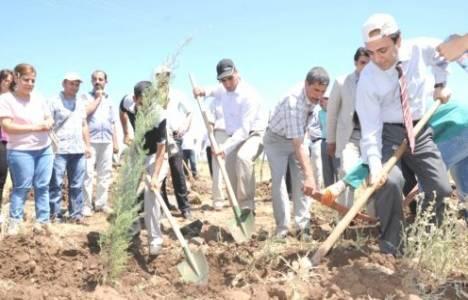 Diyarbakır'a Barış Ormanı kuruluyor!