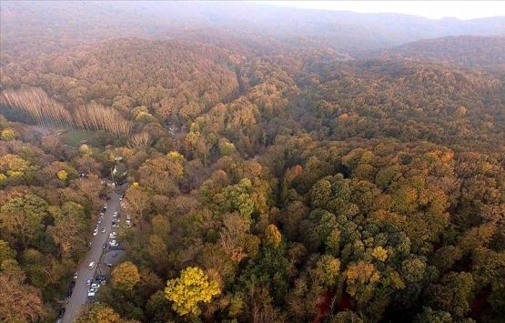 İstanbul ormanlarında 315