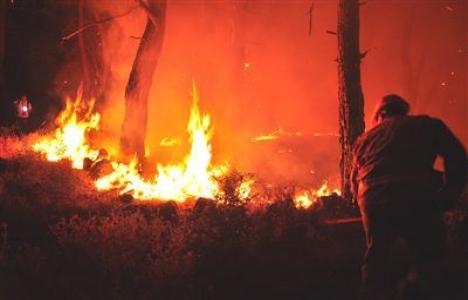 Bodrum'daki orman yangınında 1 hektarlık alan zarar gördü!