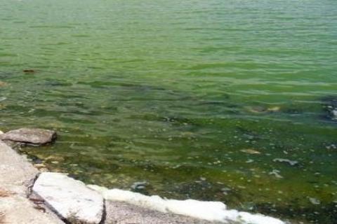 Küçükçekmece Gölü'nün suyu yeşil renge büründü!