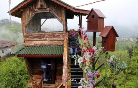 Ceviz ağacından 2 katlı ahşap ev inşa etti!