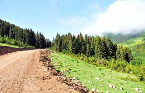Yeşil Yol projesinin