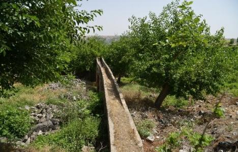 Diyarbakır Hevsel Bahçeleri'ndeki