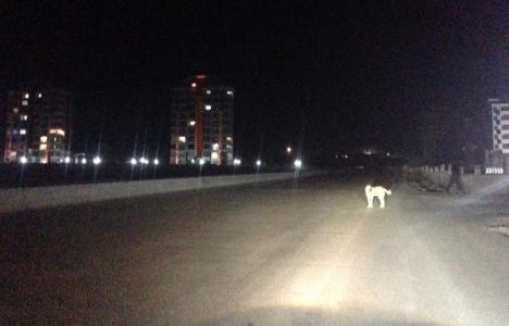 Ankara Bağlıca'da aydınlatma sorunu yaşanıyor!