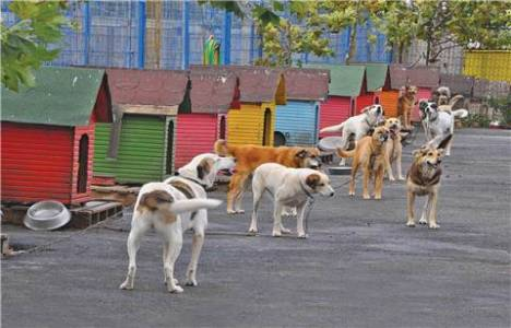 Kadıköy Hayvan Barınağı