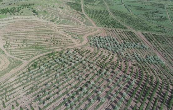 Ankara Atatürk Orman Çiftliği arazisi 158 dekar daha küçüldü!