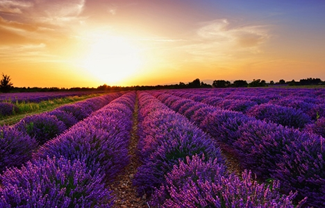Çiçek üretimi için arazi aranıyor!