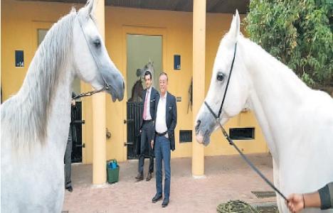Marzuk Ailesi, Ali Ağaoğlu'na Arap atı hediye etti!