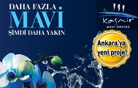 Kaşmir Mavi Orkide projesinde ön talep toplanıyor!