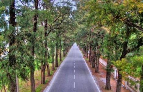 Bornava'daki ağaçlı yol