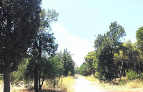 Bornova'da ikinci Ağaçlı Yol vakası!