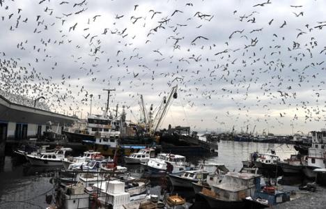 Kumkapı Balık Hali'ne