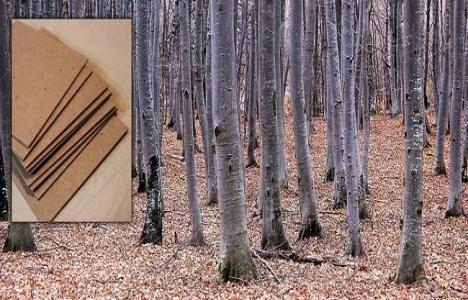 Ormancılık sektörü, 25 milyar dolar ekonomik büyüklük hedefliyor!