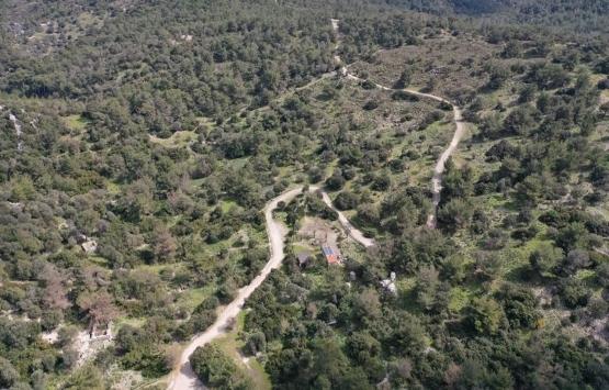 Bodrum'da Pedasa Antik Kenti'ndeki 170 dönümlük arazi 35 milyona satılıyor!
