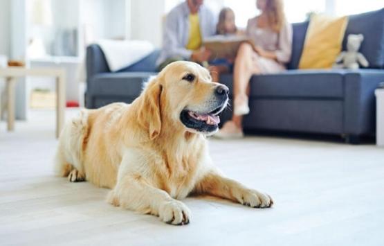 Apartmanda kedi, köpek beslemek yasak mı? Dikkat!
