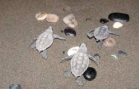Mersin-Silifke arası sahil şeridi doğal sit alanı ilan edildi!