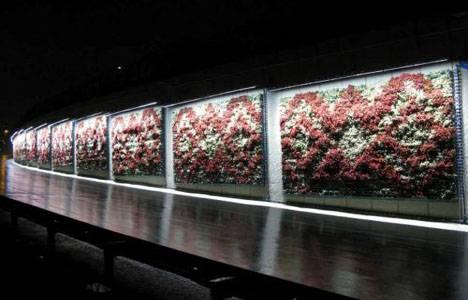İstanbul'un duvarları çiçek açtı!