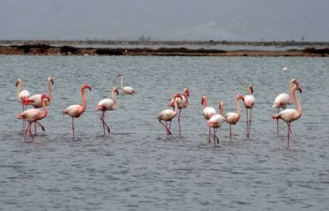 İzmir Kuş Cenneti'ne