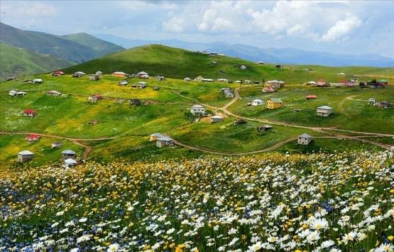 Trabzon'daki Barma Yaylası Turbalığı kesin korunacak hassas alan ilan edildi