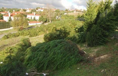 Büyükçekmece'de 201 ağaç kimliği belirsiz kişilerce kesildi!