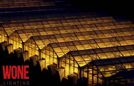 Wone Lighting ürünleri ile seralarınızı en verimli şekilde aydınlatın!