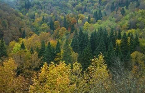 Orman Kanununun 17 ve 18. Maddelerinin Uygulama Yönetmeliğinde Değişiklik!