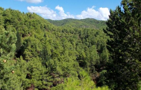 Orman alanlarıyla ilgili önemli düzenleme!
