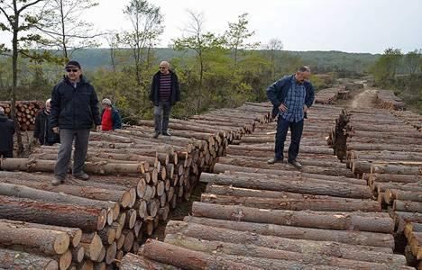 İsmail Üzmez: Sinop'taki kesim orman işletmeciliği!