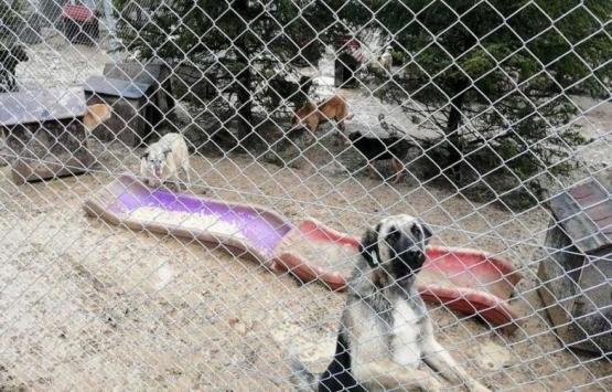 Ankara'daki köpek barınağı millet bahçesi oluyor!