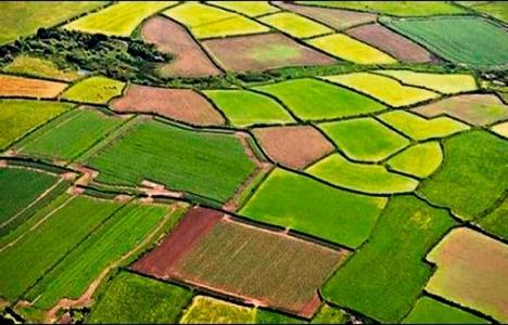 Verimli araziye sit