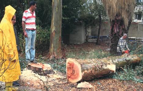Aydın Kuşadası'nda ağaç