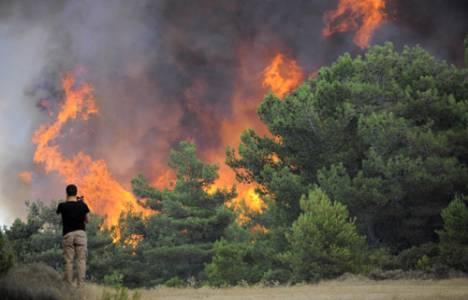 Milas'ta orman yangını çıktı!